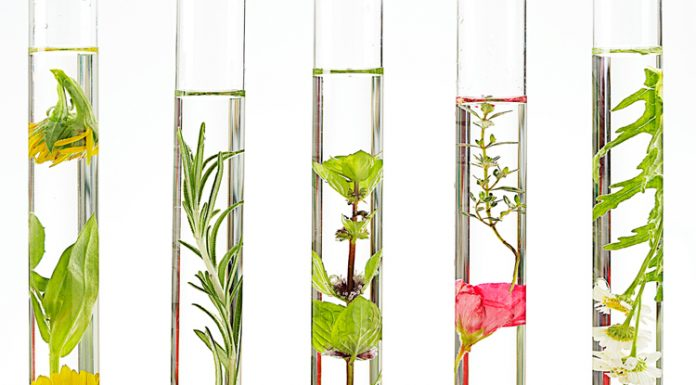 Plant Stem Cell For Cosmetics Market