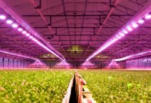 LED Lighting for Horticulture Application Market