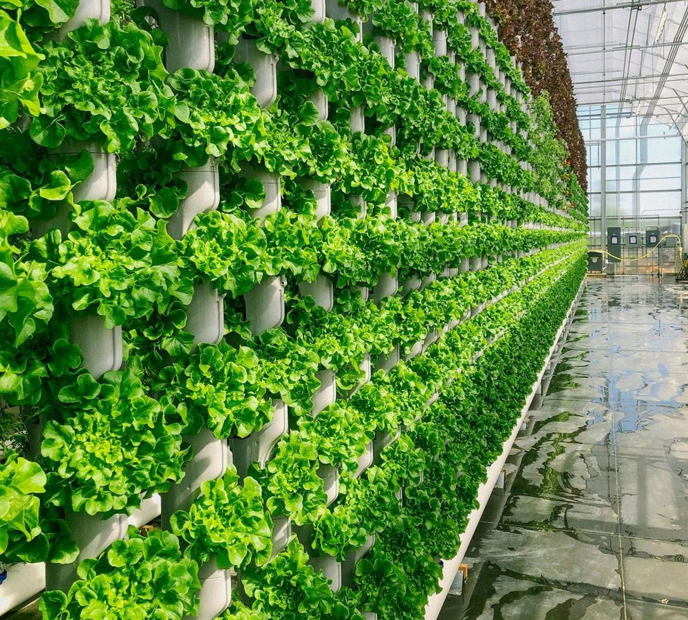Vertical Farming And Plant Factory Market Insights 2019 A2z Press Release