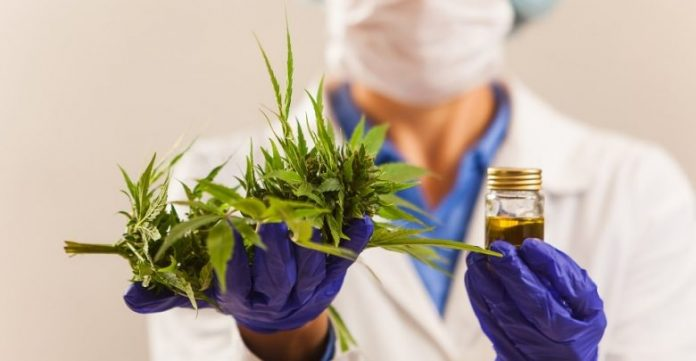 Chromatography Based Cannabis Analysis Market Size